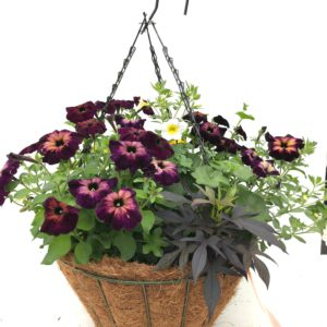 Sizzle 16 inch sun hanging basket