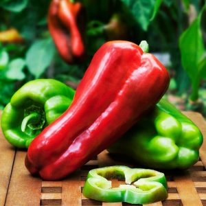 """6"""" Pepper Sweet - Big Bertha ONLY AVAILABLE IN STORE"""