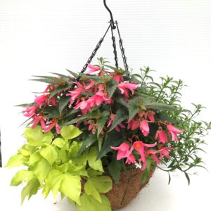 Sizzle 16 inch shade hanging basket