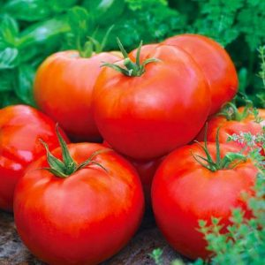 """4"""" Tomato - Burpee Big Boy - SOLD OUT"""