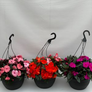 12 inch new guinea hanging baskets