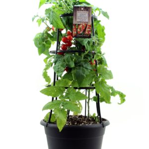 siam patio tomato vegetable planter