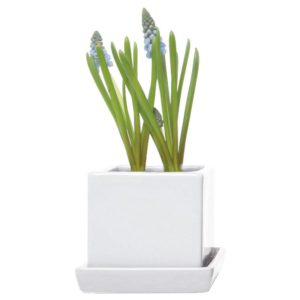 Cube and saucer indoor pot