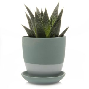 dyad pot and saucer indoor
