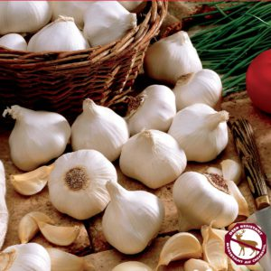 white garlic bulbs cloves bulbs