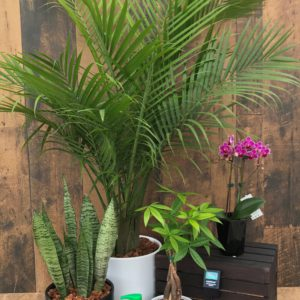 tropical plant kit