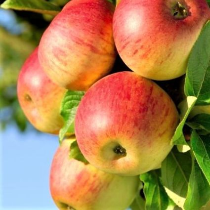 How To Plant & Grow Fruit Trees