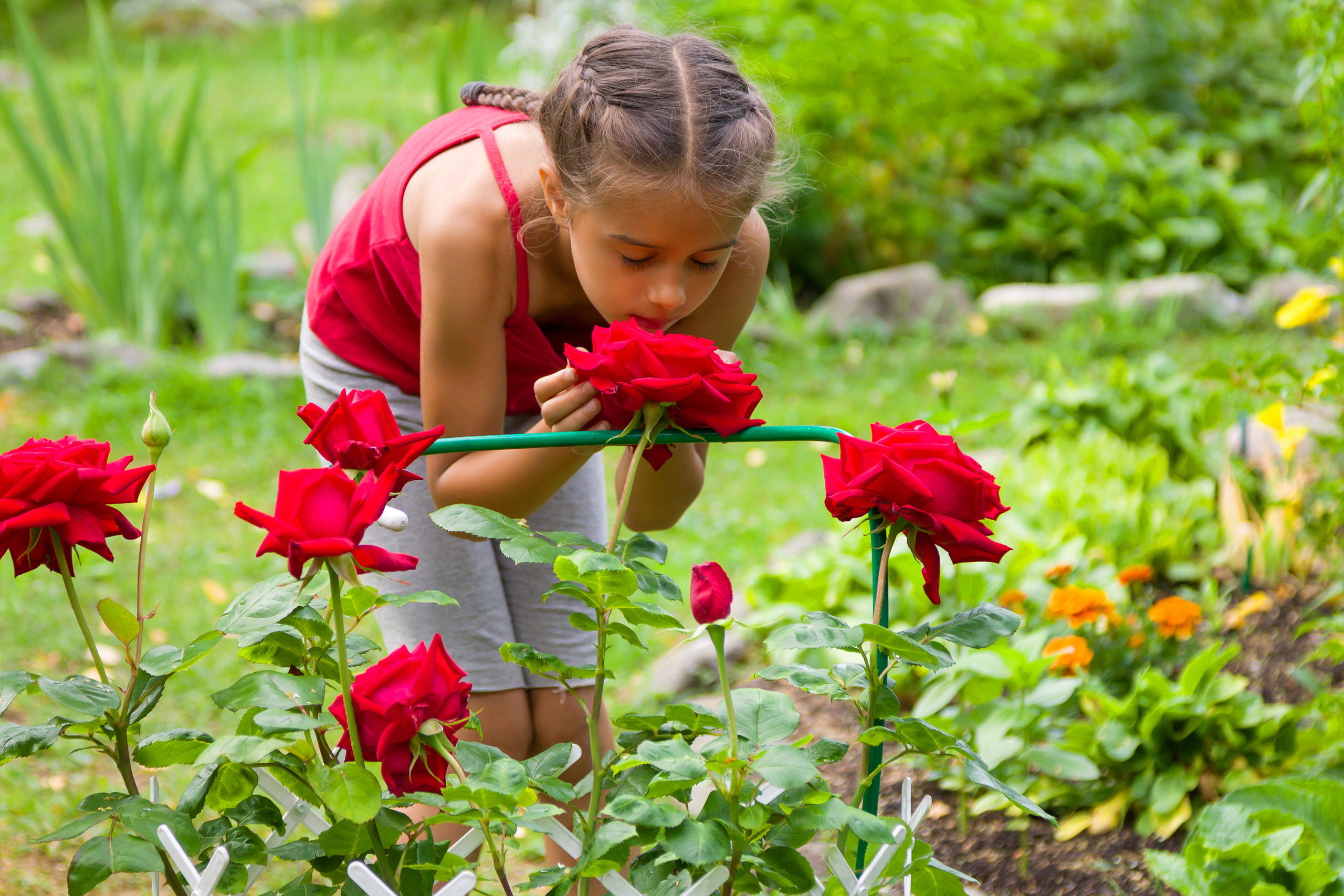 Your Guide To Growing Roses