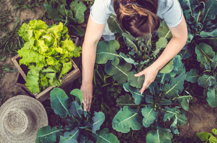 Growing Food At Home (In Any Space!)