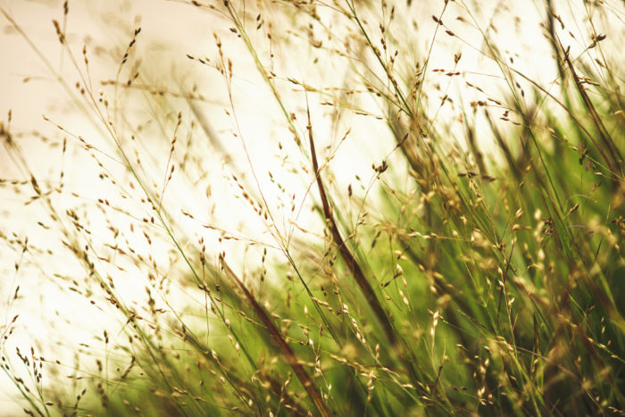 Your Guide To Ornamental Grasses