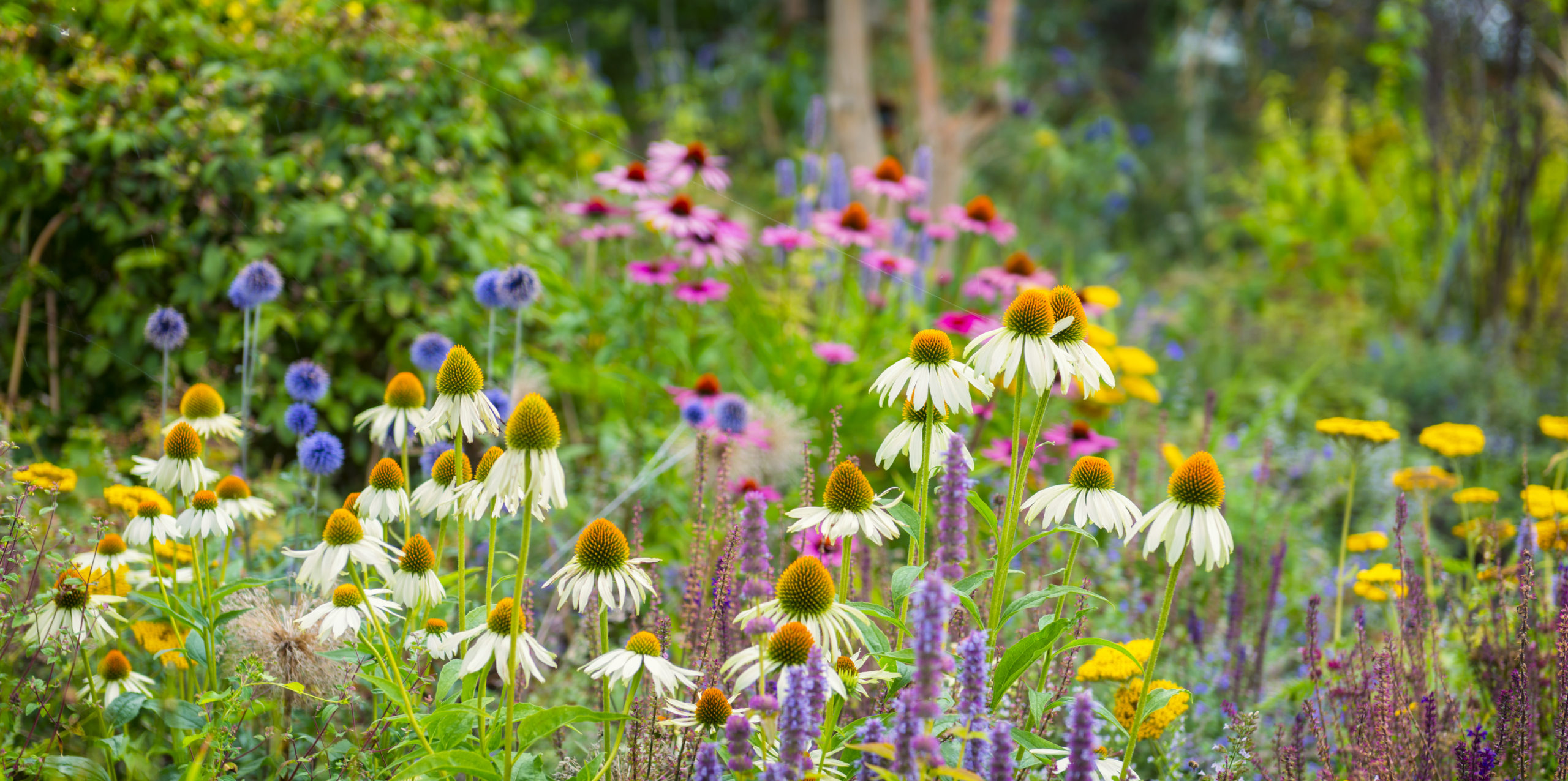 Our TOP TEN Plants For Late Summer