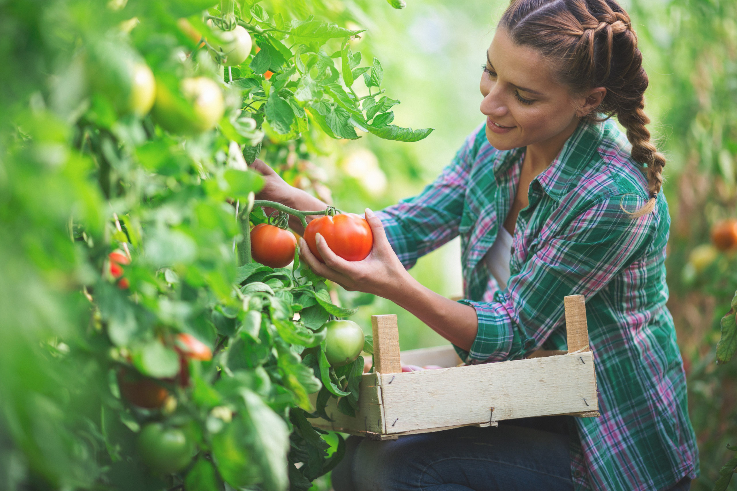 Grow Your BEST Tomatoes At Home